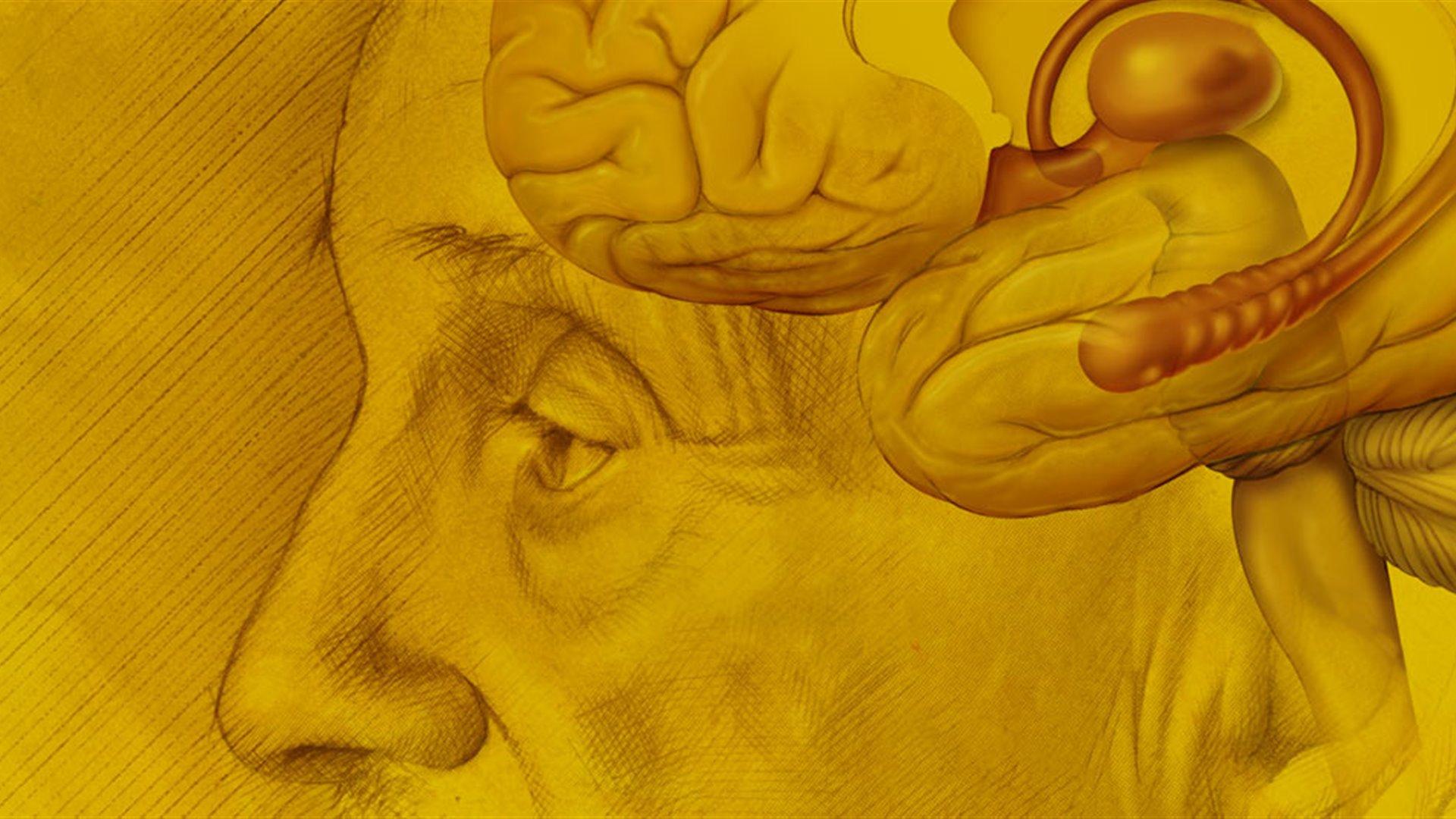 El cerebro que aprende (I)