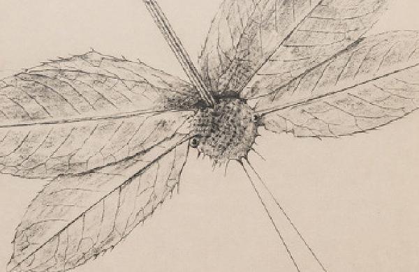 Max Ernst: Historia natural (1926)